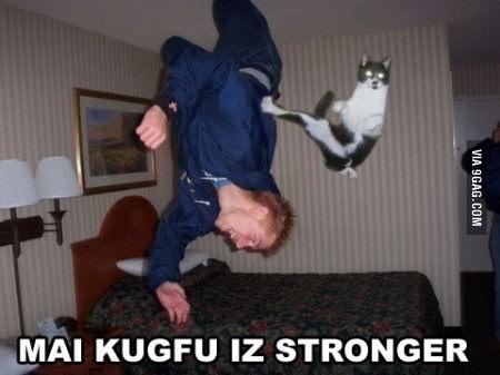 kungfucat